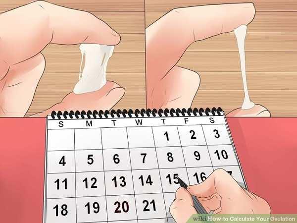 Nhận biết ngày rụng trứng căn cứ vào dịch nhầy cổ tử cung
