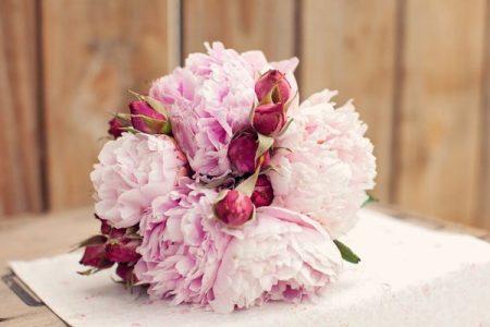 Hoa Mẫu Đơn tượng trưng cho vẻ đẹp dịu dàng - hiền thảo của người mẹ