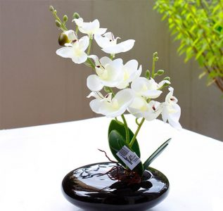 Hoa Lan trắng - biểu tượng cho tình yêu chân thành của bạn đối với mẹ