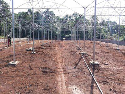 Thiết kế nhà lưới trồng rau thủy canh