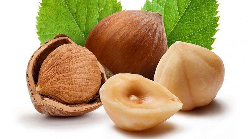 Hạt macca chứa nhiều dưỡng chất rất tốt cho cơ thể.