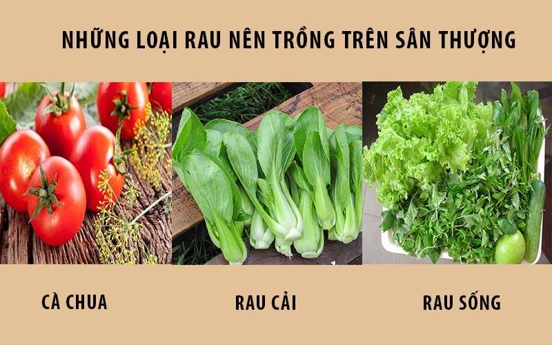 Các loại rau nên trồng trên sận thượng