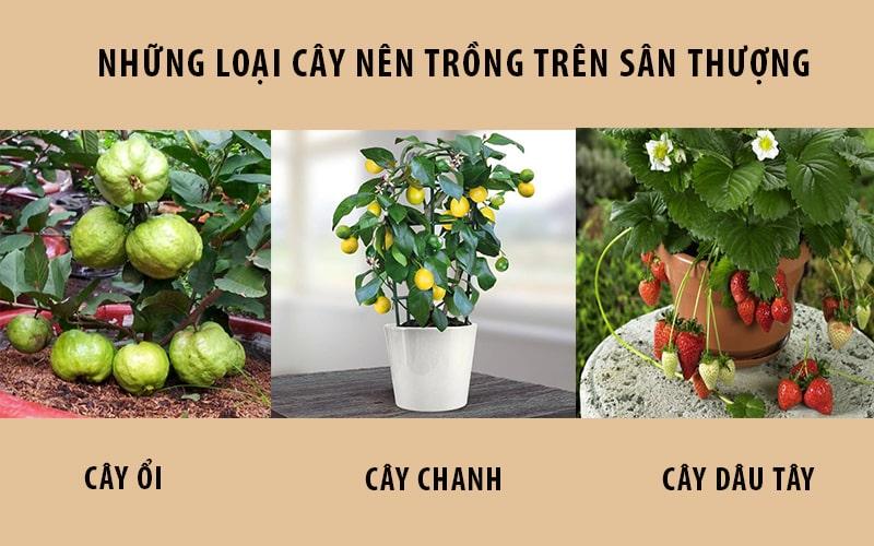 Các loại cây nên trồng trên sận thượng