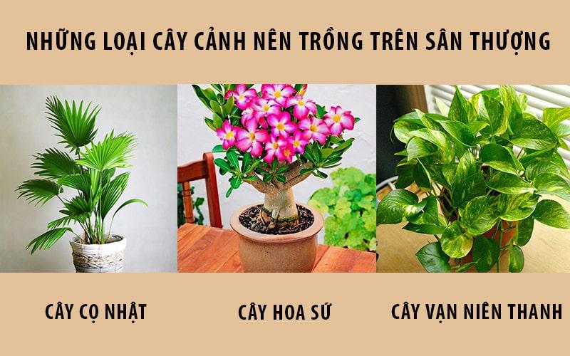 Các loại cây cảnh nên trồng trên sận thượng