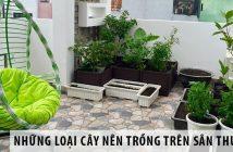 Những loại cây nên trồng trên sân thượng ai cũng nên biết