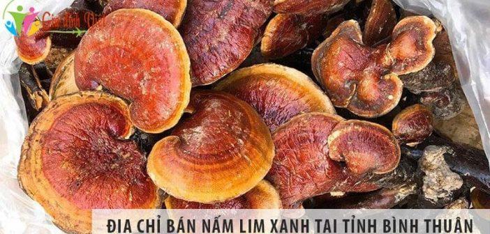Địa chỉ bán nấm lim xanh rừng uy tín tại tỉnh Bình Thuận