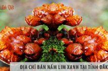 Địa chỉ bán nấm lim xanh tại tỉnh Đắk Lắk uy tín nhất